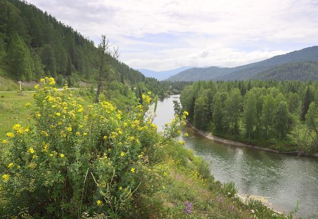 Un cespuglio fiorito sul pendio all'ansa del fiume nei monti altai siberia russia