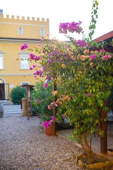 Arbusti fioriti sullo sfondo di un'antica villa in toscana