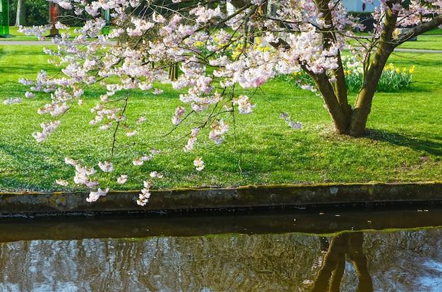 Albero in fiore dal canale nel parco di primavera