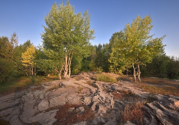 Alberi in fiore crescono sul terreno roccioso rocce vulcaniche a strati blu cielo chiaro siberia russia