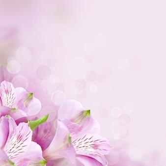 Sfondo di fiori, bella natura primaverile