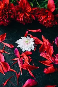 Fiori su sfondo nero. mazzo di peonie. perfetto piatto disteso con petali. cartolina per le vacanze madri felici. saluto per la giornata internazionale della donna. idea di compleanno per la pubblicità. invito.