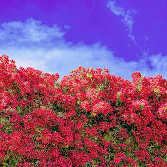Fiori. fioritura. isole canarie vibrazioni estive