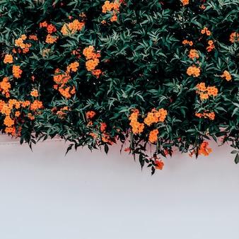 Fiori. fioritura. isole canarie