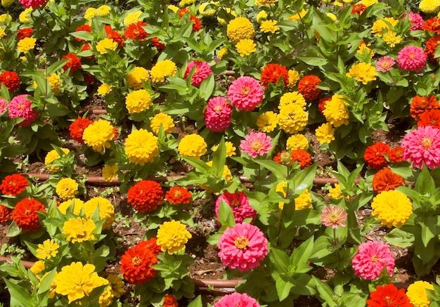 I fiori si chiudono