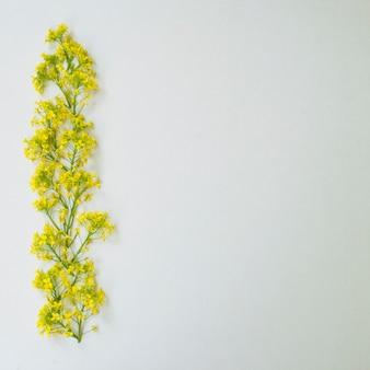 Composizione di fiori bordo fatto di fiori di colza.