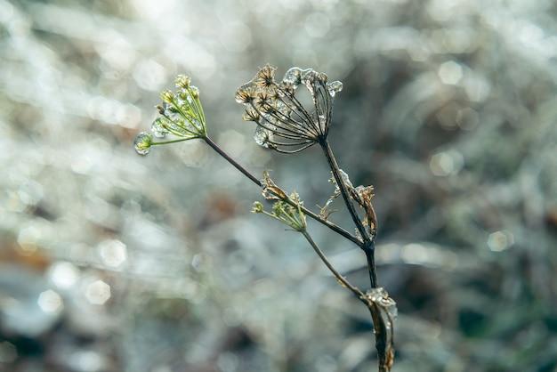 Fiori ricoperti di ghiaccio dopo la pioggia gelata, bellissimo sfondo invernale, gelo invernale