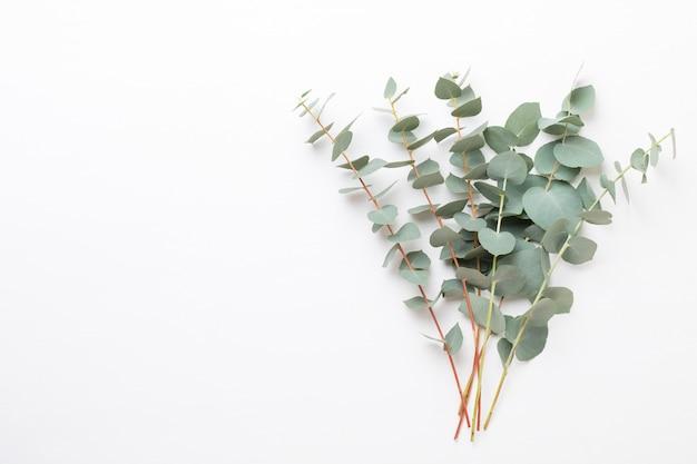 Composizione di fiori ed eucaalipto. modello costituito da vari fiori colorati su sfondo bianco. vita piatta laica.