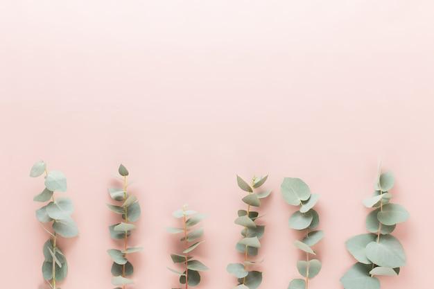 Composizione di fiori ed eucaalipto. modello costituito da vari fiori colorati su bianco piatto laici vita stiil.