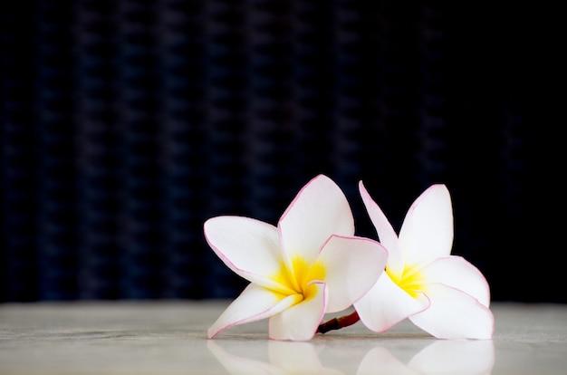 Frangipani fiori