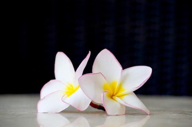 Frangipani di fiori