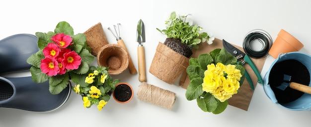 Fiori e strumenti di giardinaggio sulla tavola bianca, vista superiore