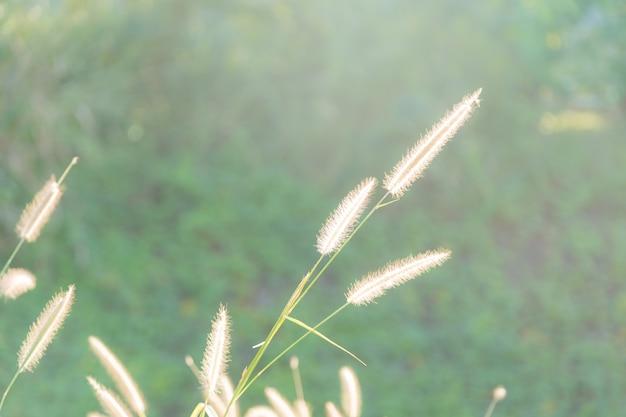 Fiori di erba