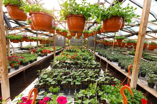 Fiori all'interno di una serra di garden center, foto grandangolare
