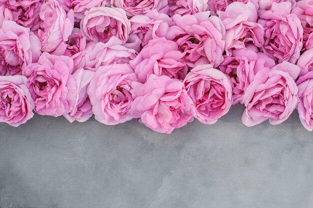 Fiori di una rosa rosa chiaro su uno sfondo grigio spazio copia matrimonio giorno delle donne san valentino