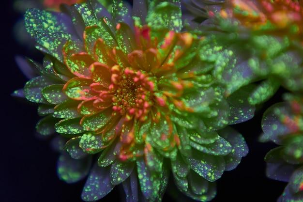 I fiori nelle gocce di vernice brillano alla luce ultravioletta. cosmetici di bellezza naturali