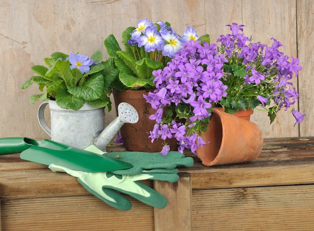 Fiori, vasi e accessori da giardinaggio sulla tavola di legno