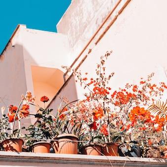 Umore urbano di fiori. canarie
