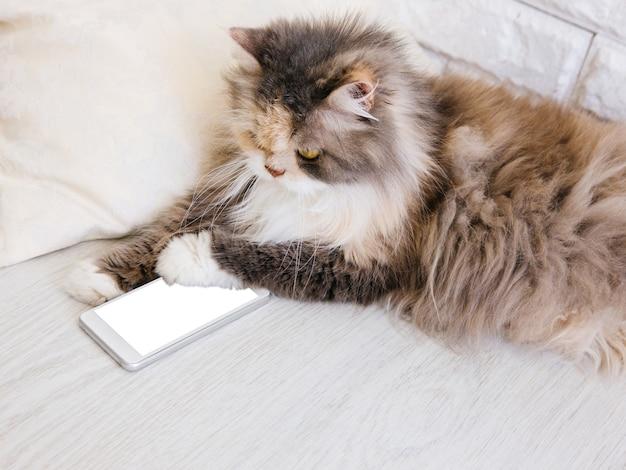 Gatto lanuginoso che gioca con lo smartphone, mettendogli una zampa giù. animale domestico di famiglia con petto bianco e folto e lunghi baffi interessati alla nuova tecnologia delle persone
