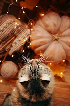 Soffice gatto, una zucca matura e una sciarpa colorata lavorata a maglia con una ghirlanda luminosa