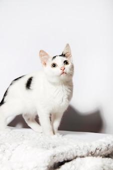 Gatto birichino su sfondo bianco