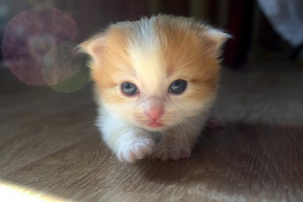 Gattino carino birichino Foto Premium
