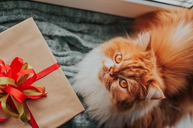 Un soffice gatto allo zenzero giace su una stuoia lavorata a maglia accanto a una confezione regalo con un fiocco rosso e verde.