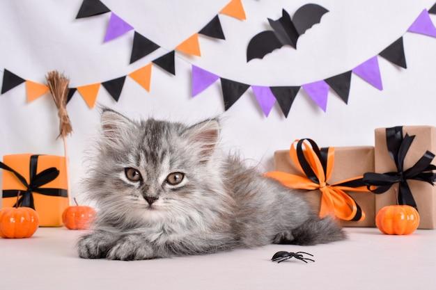 Gatto grigio lanuginoso nell'arredamento di halloween. una cartolina per il giorno di heluin.