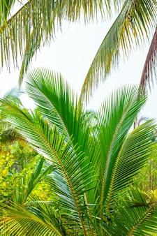 Soffici foglie di palma nella foresta tropicale viaggi e turismo in asia