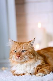 Gatto rosso lanuginoso sdraiato su un tappeto