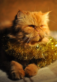 Ritratto di gatto persiano rosso lanuginoso con ghirlande a capodanno e natale