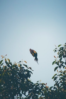 Azione volante di uccello
