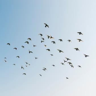 Uccelli in volo nel cielo
