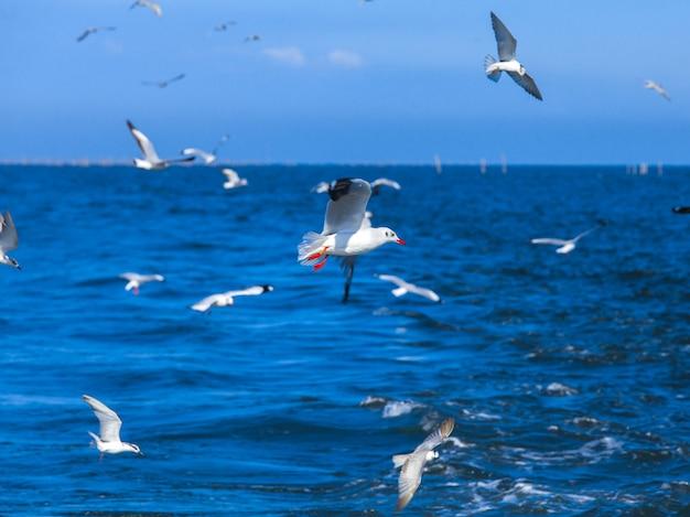 Gabbiani di volo dopo la barca di velocità in golfo della tailandia