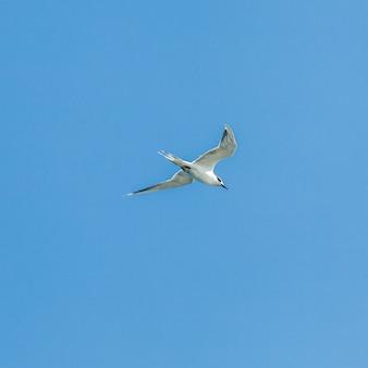 Gabbiani in volo su cielo blu