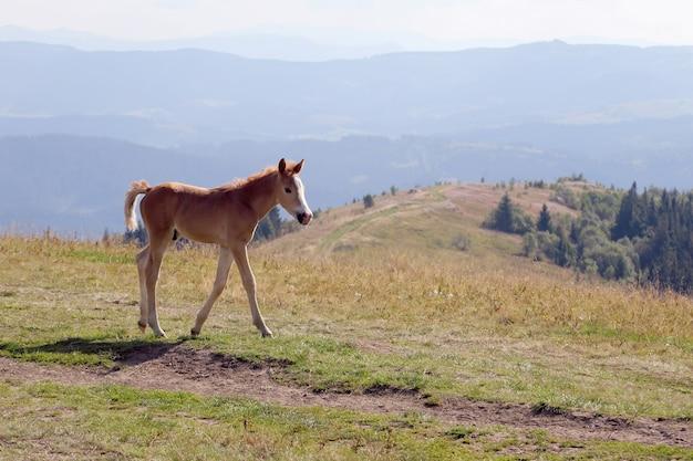 Puledro sullo sfondo del terreno montuoso