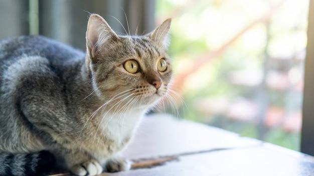 Focus sul naso di un gatto a strisce grigio seduto nella stanza.