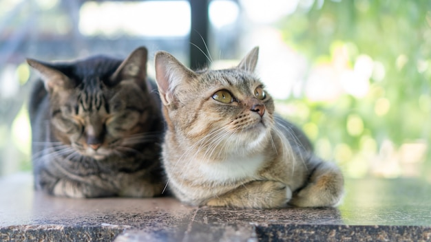 Concentrati sul naso di un gatto a strisce grigio seduto nella stanza.
