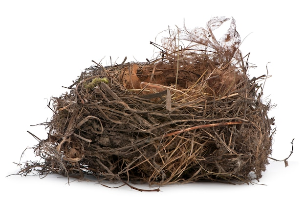 Focus accatastamento di un nido di merlo comune