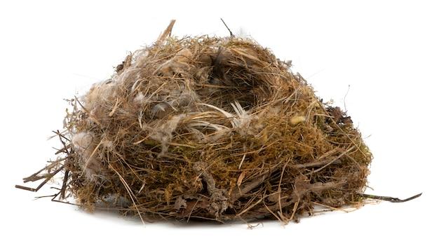 Focus stacking di un nido