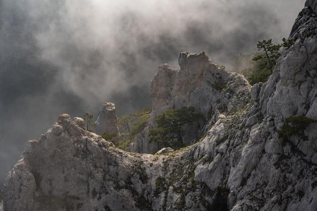Nebbia che copre le foreste di montagna.