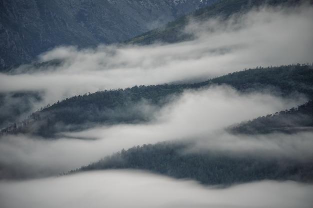 Nebbia che copre i boschi di montagna
