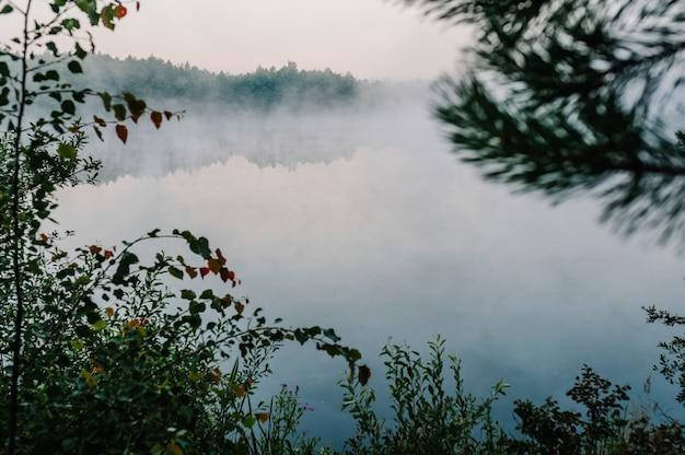 Nebbia, erba, alberi sullo sfondo di laghi e natura. sfondo di pesca.