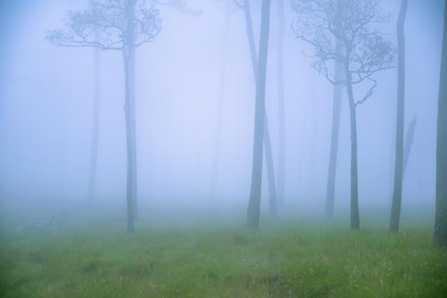 Nebbia o nebbia sull'albero nella foresta