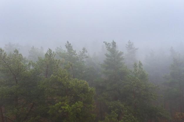 Foresta decidua variopinta di autunno nebbioso. fitta foresta al mattino presto