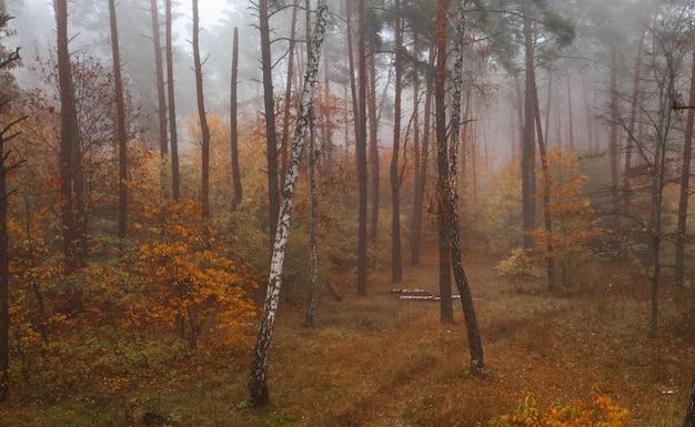 Nebbiosa foresta decidua autunnale. bella fitta foresta colorata al mattino presto