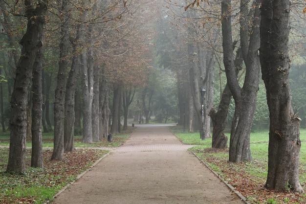 Parco cittadino nebbioso in autunno