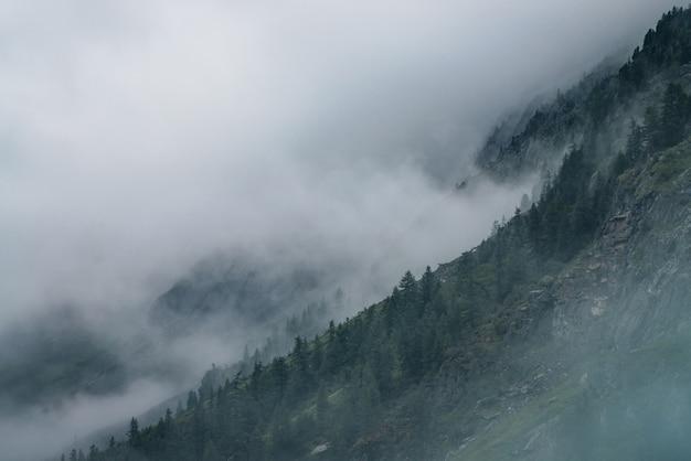 Foresta nebbiosa sulle rocce.