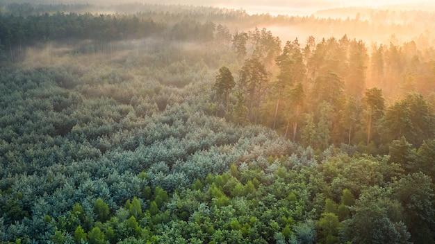 Foresta di pini verde nebbiosa con tettoie di abeti e raggi dell'alba che brillano attraverso i rami delle montagne autunnali.