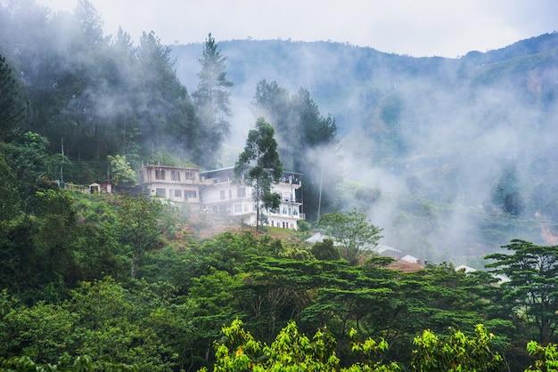 Mattinata nebbiosa in montagna nello sri lanka.